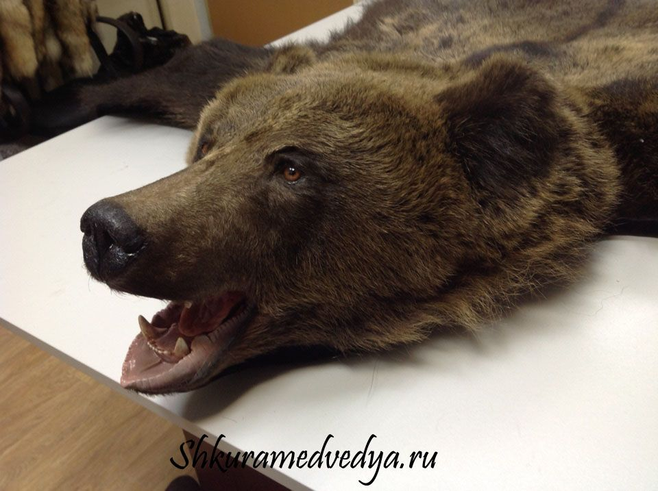 фото медведя шкура